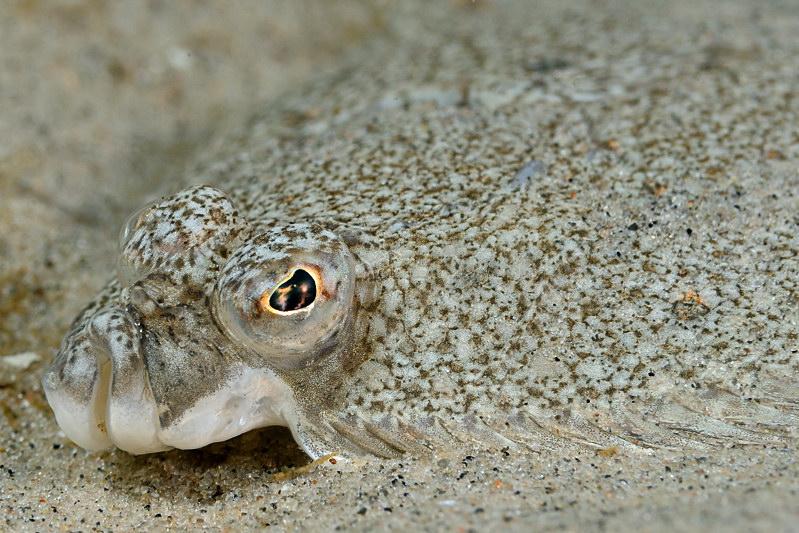 En lille flad på sandet