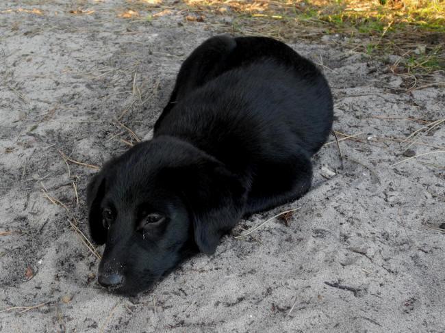 Træt lille hund