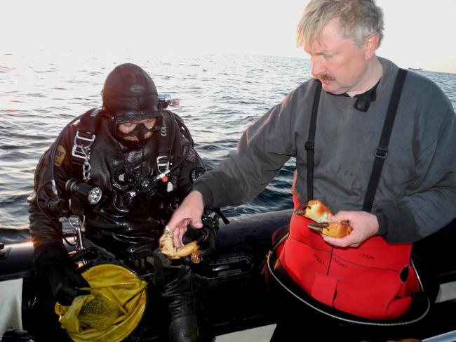 Krabbekløer