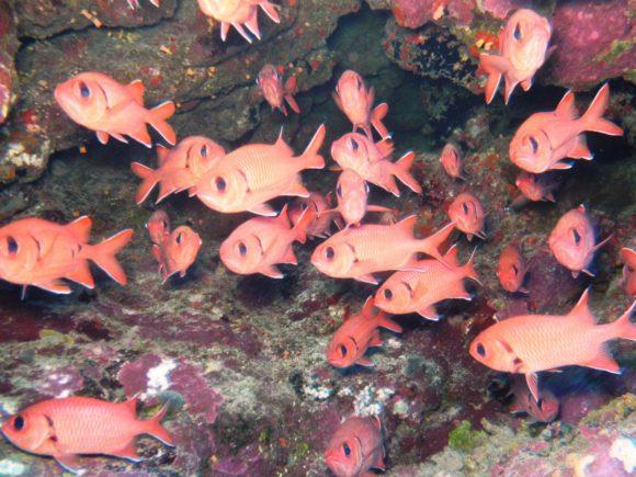 Masser af fisk i hulerne